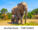 elephants enjoying life at... | Shutterstock . vector #738724801