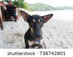Dog Eye Contact