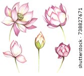 Set With Flowers Lotus. Hand...