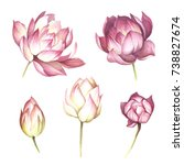 set with flowers lotus. hand... | Shutterstock . vector #738827674