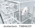 animal experiments for urine... | Shutterstock . vector #738846229