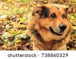 dog closeup lies on leaves in... | Shutterstock . vector #738860329