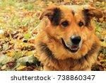 sheepdog closeup lies on autumn ... | Shutterstock . vector #738860347