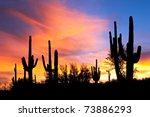 Saguaro Silhouette In Fiery...