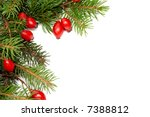 red rose hips and green spruce... | Shutterstock . vector #7388812