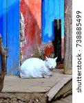 Small photo of albino kitty