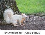 Albino White Squirrel Standing...