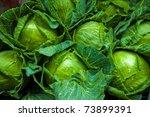 fresh green cabbage closeup... | Shutterstock . vector #73899391