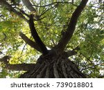 up the tree | Shutterstock . vector #739018801