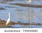 stork is walking on the water...   Shutterstock . vector #739020085