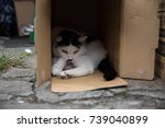 keen eyed cat in the box | Shutterstock . vector #739040899