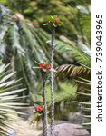 Small photo of Crown of Thorns, also called Christ thorn (Euphorbia milii), thorny vinelike plant of the spurge family (Euphorbiaceae) with blurred background