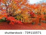 fall scenery of fiery maple... | Shutterstock . vector #739110571