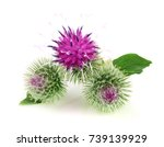 burdock flower isolated on... | Shutterstock . vector #739139929