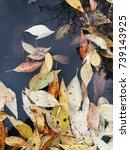 leaves in water  autumn   Shutterstock . vector #739143925