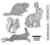 Forest Animal Hare  Rabbit ...