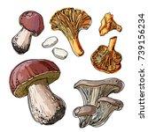 set of edible mushrooms. a... | Shutterstock .eps vector #739156234