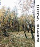 autumn forest   Shutterstock . vector #739168651