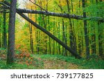 dense autumn woodland with old... | Shutterstock . vector #739177825