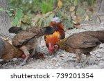chickens | Shutterstock . vector #739201354