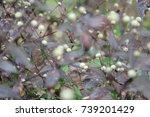 flowers   Shutterstock . vector #739201429