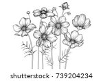 cosmos flowers drawing with... | Shutterstock .eps vector #739204234
