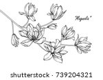 Stock vector magnolia flowers drawing with line art on white backgrounds 739204321