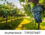 grape harvest | Shutterstock . vector #739207687