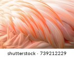 macro texture of flamingo bird... | Shutterstock . vector #739212229