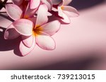 flower soft pink at beautiful ... | Shutterstock . vector #739213015