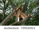 damaged tree in city in germany | Shutterstock . vector #739233511