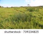 salt marshes in probstei area... | Shutterstock . vector #739234825