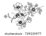 flowers drawing with line art... | Shutterstock .eps vector #739235977