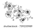 flowers drawing with line art...