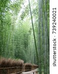 the bamboo groves of arashiyama ... | Shutterstock . vector #739240021