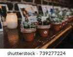 Plant Favors