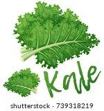 kale vegetable icon. cartoon... | Shutterstock .eps vector #739318219