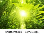 Sun Shining Into Tropical...
