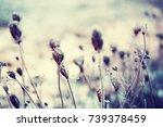 Winter Background Frozen Grass