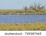 birds in the salt marshes and... | Shutterstock . vector #739387465