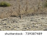 birds in the salt marshes and... | Shutterstock . vector #739387489