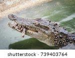 Scary Crocodile Is Eating Fresh ...