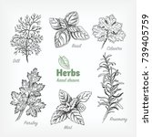 detailed hand drawn vector... | Shutterstock .eps vector #739405759