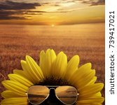 Sunflower Sunglasses Against Background A - Fine Art prints