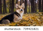 dog breed welsh corgi pembroke... | Shutterstock . vector #739421821