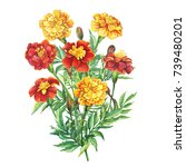 bouquet of flowers tagetes... | Shutterstock . vector #739480201