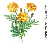 Bouquet Of Flowers Tagetes...