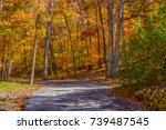 foliage in the woods of the... | Shutterstock . vector #739487545