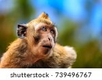monkey in the middle of the... | Shutterstock . vector #739496767