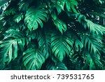 tropical jungle foliage  dark... | Shutterstock . vector #739531765
